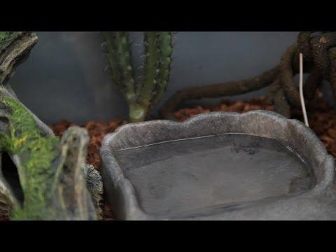 Best Snake Aquarium Accessories | Pet Snakes
