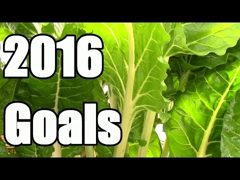 Top Five 2016 Gardening Goals: Grow More, Work Less, Spend Less, Learn More, Have More Fun
