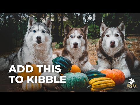 Top 3 Foods For Dogs + Feeding Training | Husky Squad