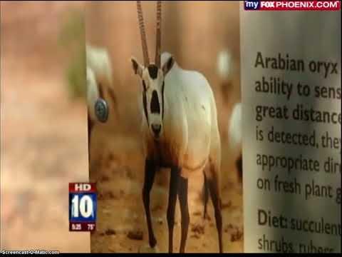 Phoenix Zoo Helps Save Endagered Species