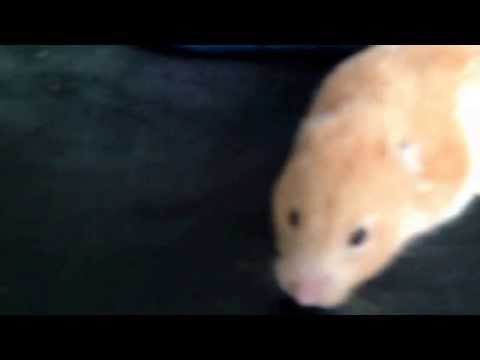 Best way to get rid of hamster