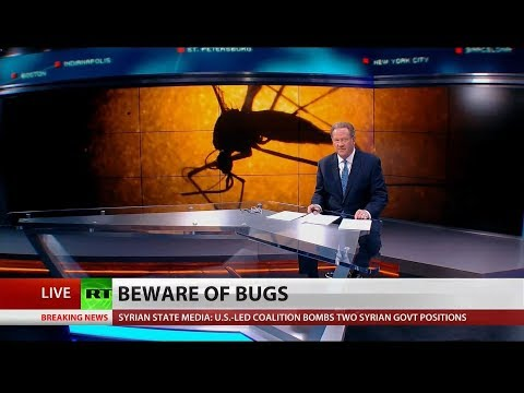 Bug Out: Beware of Diseased Bugs, Say Experts