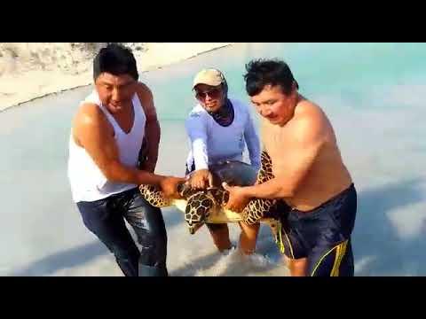 Rescate de tortuga carey en Ría Lagartos