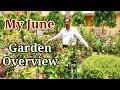 My June Garden Overview. My Garden in Hot Summer Season