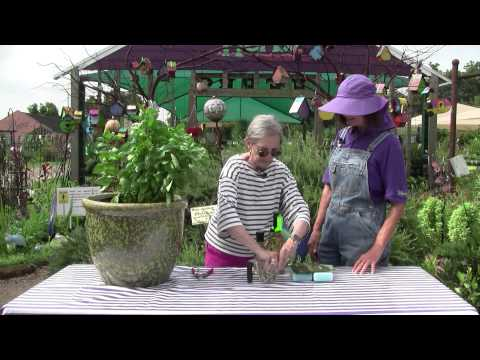 How to Preserve Summer Herbs with Ann Wheeler