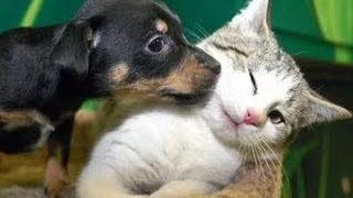 Kittens Meet Puppies For The First Time Try Not to Laugh! - Cats Meeting Dogs, Funny Kitty Cats