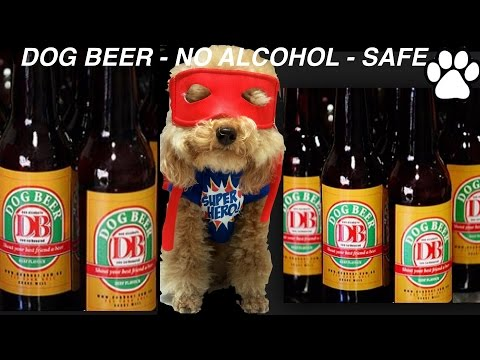 How to make DOG BEER - NO ALCOHOL - SAFE NON TOXIC - DIY Dog Food by Cooking For Dogs