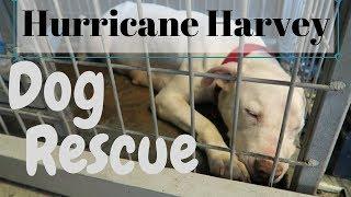 HURRICANE HARVEY: THE DOG RESCUE CONTINUES   InRuffCompany.com