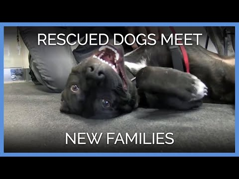 Dogs Rescued by PETA Meet New Families for the First Time
