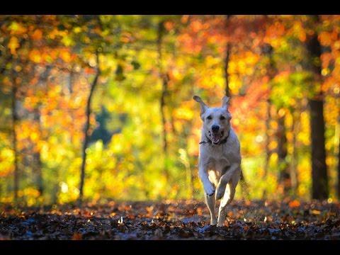 Dog Training Oregon