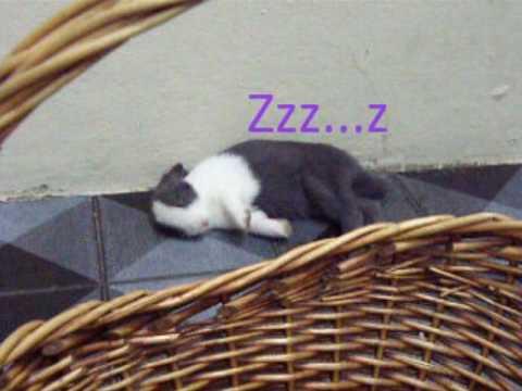 Bunny falls asleep easily!!! [MEEPOR]