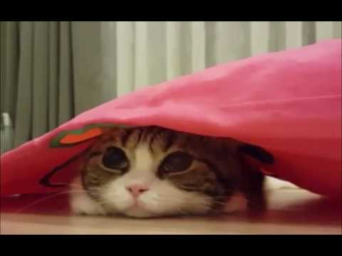 when your cat Watching Horror Movie...!!! เมื่อเจ้าเหมียว ว วดูหนังผี....!!!