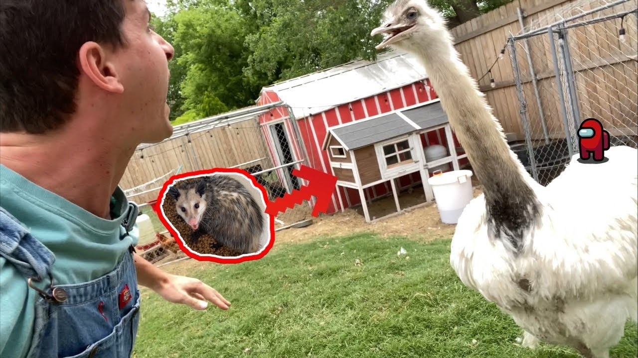 Kevins Acting Sus Again... (How to Survive a Rhea Attack p3)