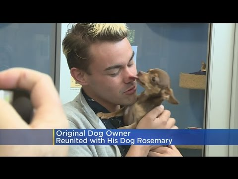 Man Reunited With Missing Dog That Had Been Adopted Out To Another Family