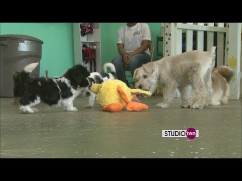 Studio 10 - How To Choose A Puppy