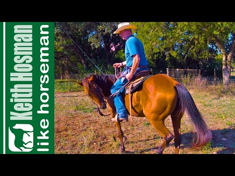 Train Your Horse to Lower Its Head & Relax