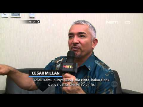 NET24 - Profile Cesar Millan