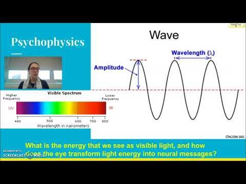 Vision: Psychophysics Wave properties, amplitude, wavelength