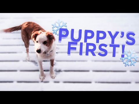 PUPPY'S FIRST SNOWFALL!