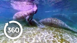 Let's Go Places: Florida | Oh, the Huge Manatees! (360 Video)
