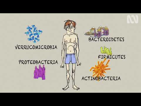 How Gut Bacteria Affect Your Health