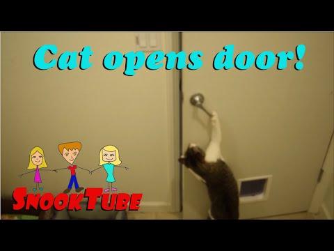 Super Smart Cat opens door all by himself!