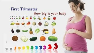 How big is your baby week by week fruit comparison - First Trimester
