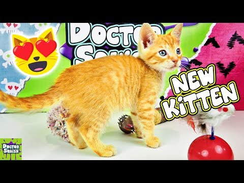 Xxx Mp4 Meet My New Kitten Adorable New Baby Squish Kitty Doctor Squish 3gp Sex