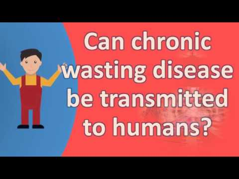 Can chronic wasting disease be transmitted to humans ? |Frequently ask Questions on Health