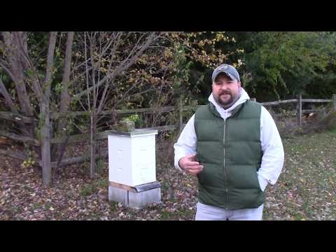My 1st year raising honey bees - some things I learned