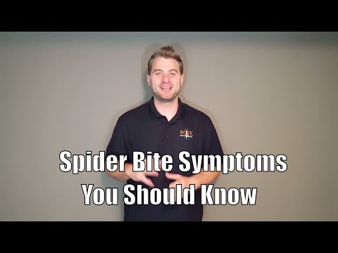 Spider Bite Symptoms You Should Know