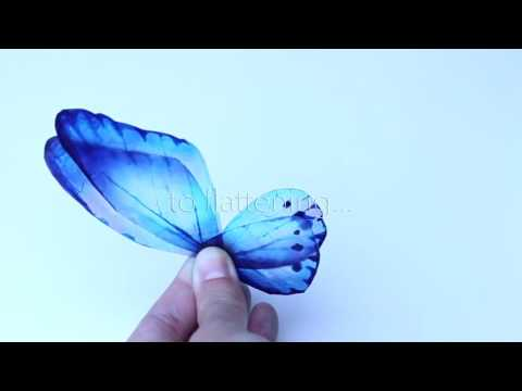 Rice Paper Butterfly TEASER by ChokoLate