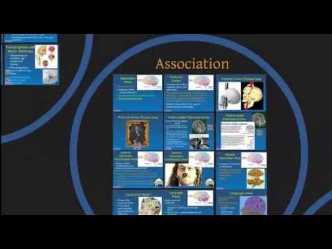 AP1 Module 7:  Central Nervous System