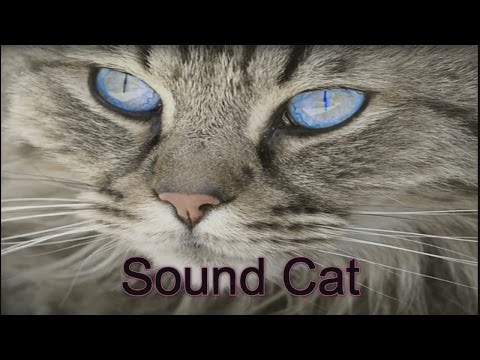 Sound of cats to scare the rats were updated in 2017