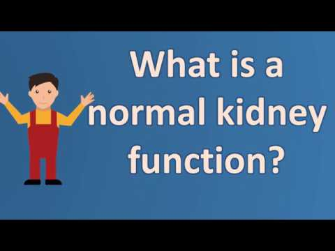 What is a normal kidney function ?