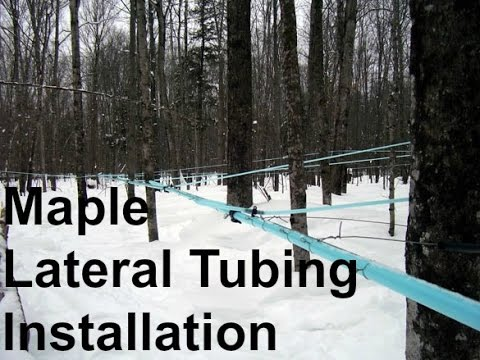 Maple Lateral Installation