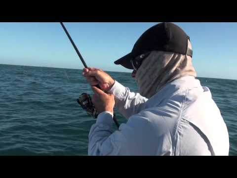 Needle Scale Queenfish aka Double Spot Salad - The Raw Files