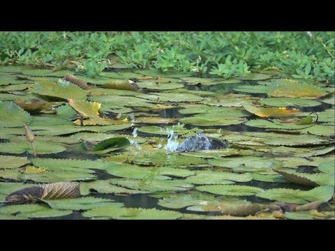 Epic Frog Blowups!