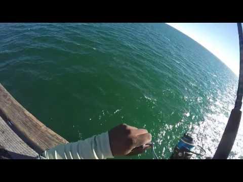 Navarre Pier Fishing 6/23/16 King/Spanish Mackerel
