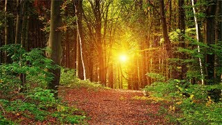 3 Hours Music With No Loops. Inner Peace, Relaxing, Soothing Music