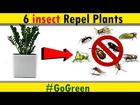 6 Plants That Repel Mosquitoes and Other Insects - Plants that keep bugs away | #GoGreen