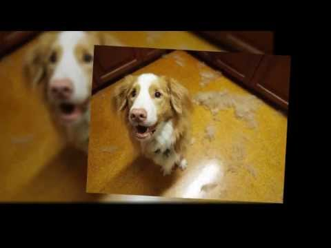 How to Control Dog Shedding?