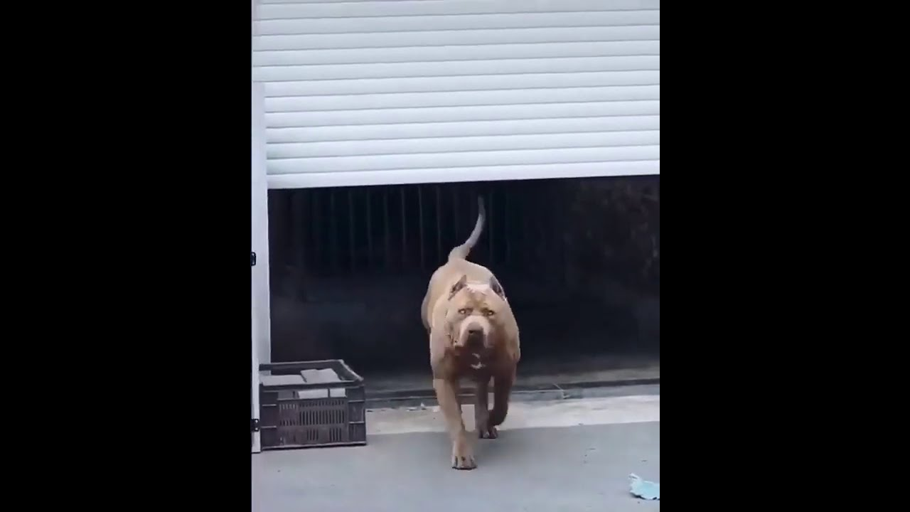 What would you do if this dog ran towards you? 💪💪🏾
