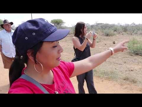HOW CHEETAHS, WILD DOGS, CARACALS AND BABOONS REACT TO FEEDING,- NAANKUSE LODGE PART 1 (NAMIBIA)