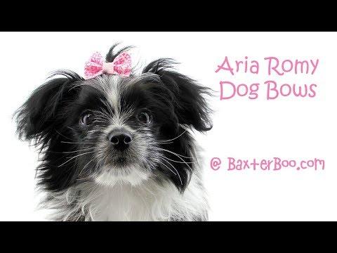 Aria Romy Dog Bows