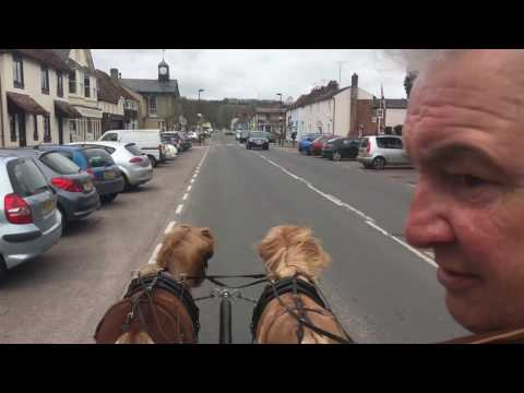 Driving a pair of miniature shetland mares