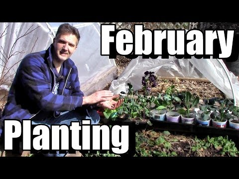 Planting Outside in February &  Free Spring Planting Calendar!
