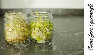 La semina delle lenticchie di ventotene music jinni for Semina arachidi