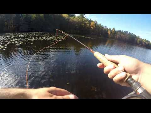 Fly fishing for Bluegill and Bass (Surprise Catch)