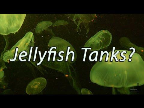 Jellyfish Tanks for Everyone?